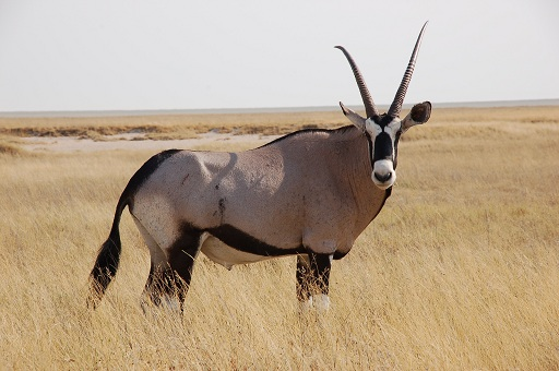 oryx hamburg