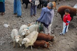 Viehmarkt-Otavalo, Ecuador